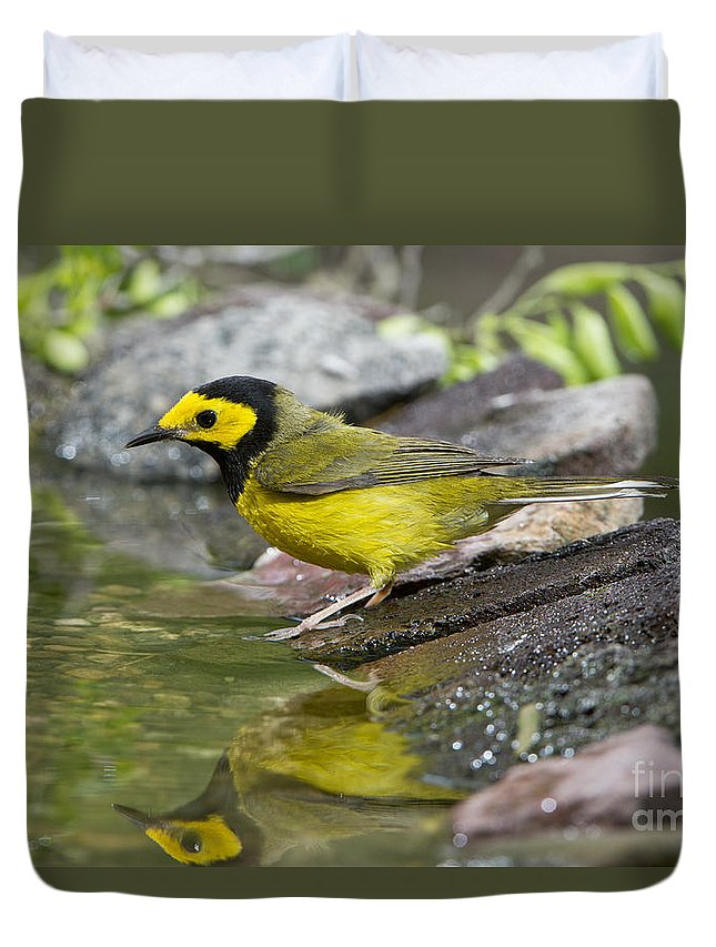 Hooded Warbler Duvet Cover featuring the photograph Male Hooded Warbler by Anthony Mercieca