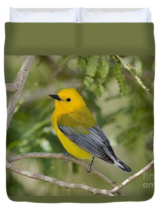 Prothonotary Warbler Duvet Cover featuring the photograph Male Prothonotary Warbler by Anthony Mercieca