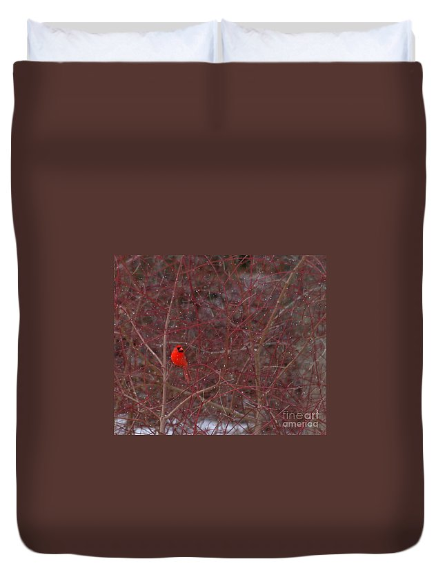 Bird Duvet Cover featuring the photograph Male Red Cardinal In The Snow by Kenny Glotfelty
