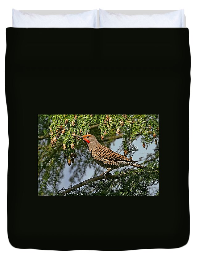 Flickers Duvet Cover featuring the photograph Male Red-shafted Northern Flicker by Peggy Collins