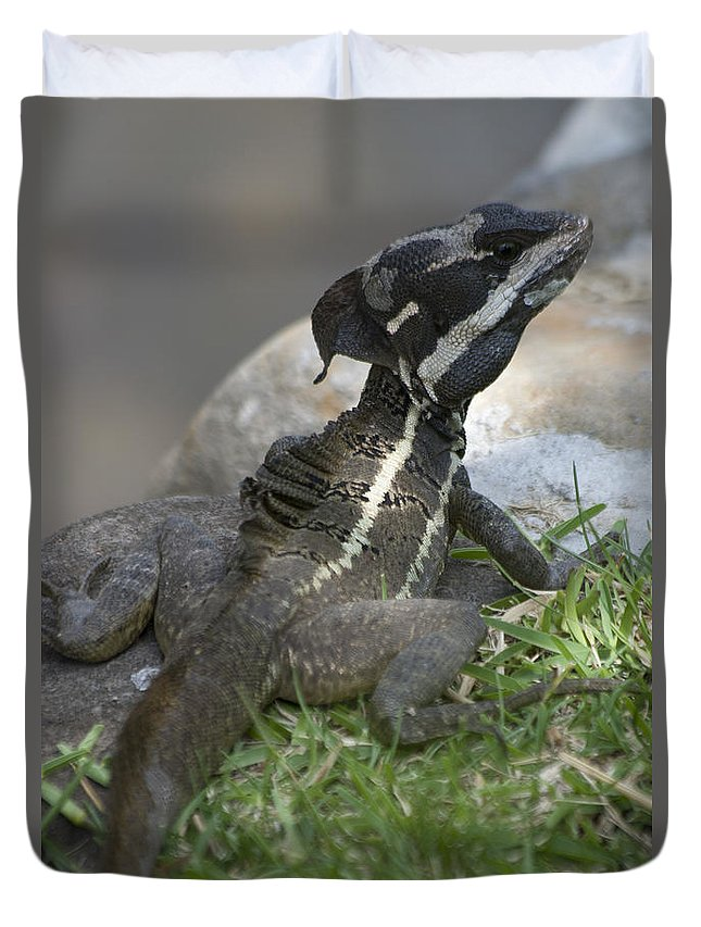 Basilisk Duvet Cover featuring the photograph Male Striped Basilisk by Heiko Koehrer-Wagner
