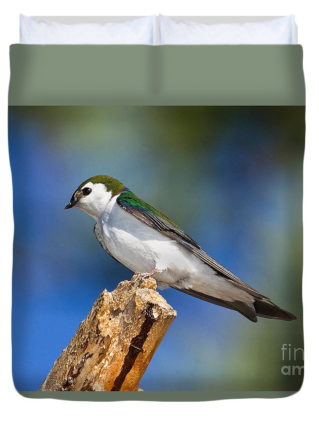 Animal Duvet Cover featuring the photograph Male Violet-green Swallow by Anthony Mercieca