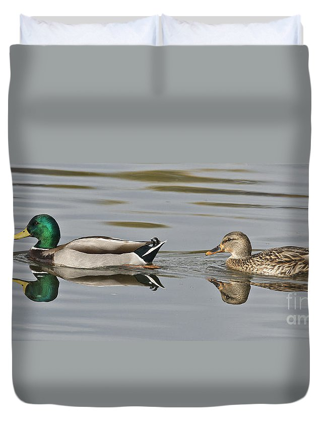 Mallard Duvet Cover featuring the photograph Mallard Drake And Hen by Anthony Mercieca