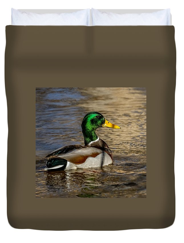 Animals Duvet Cover featuring the photograph Mallard Square Format by Ernie Echols