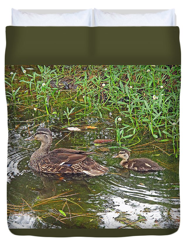 Duck Duvet Cover featuring the photograph Mama Duck And Baby by Barbara McDevitt