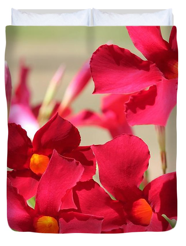 Mccombie Duvet Cover featuring the photograph Mandevilla Named Sun Parasol Crimson by J McCombie