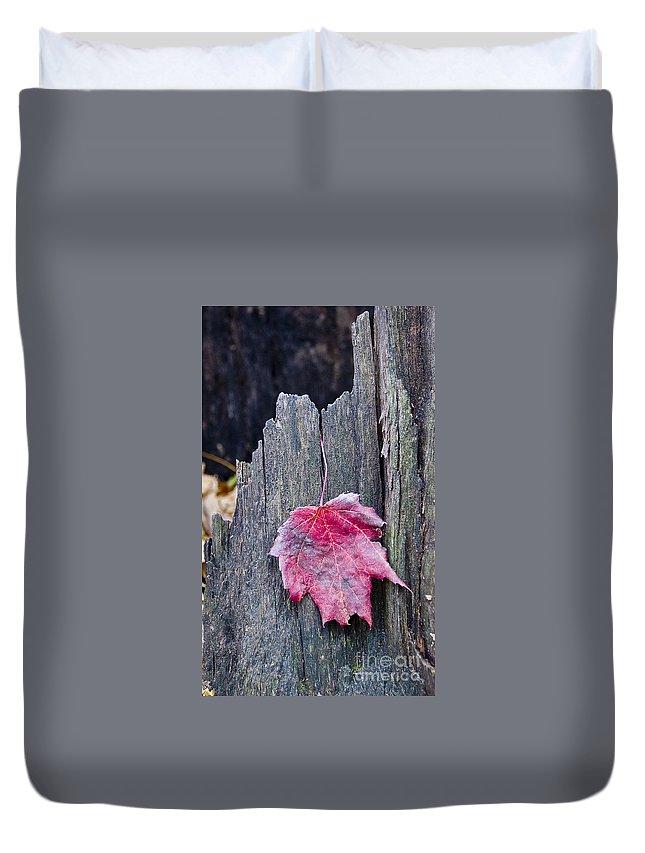 Arboretum Duvet Cover featuring the photograph Maple Leaf - Uw Arboretum - Madison by Steven Ralser