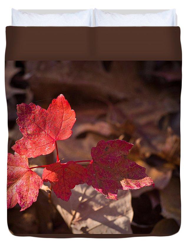 Maple Duvet Cover featuring the photograph Maple Morning by Douglas Barnett