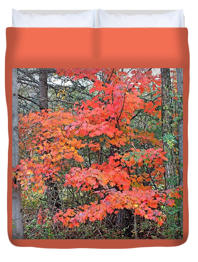 Duane Mccullough Duvet Cover featuring the photograph Maple Rush In The Fall by Duane McCullough