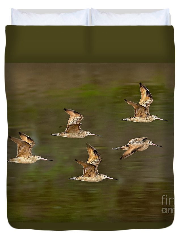 Marbled Godwit Duvet Cover featuring the photograph Marbled Godwit Flock Flying by Anthony Mercieca