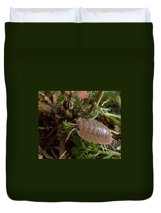 Bugs Duvet Cover featuring the photograph Marching On by Pamela Walton