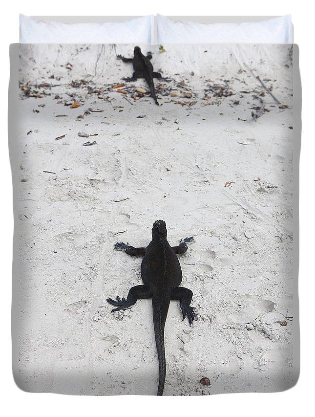 Marine Iguana Duvet Cover featuring the photograph Marine Iguanas Galapagos by Jason O Watson