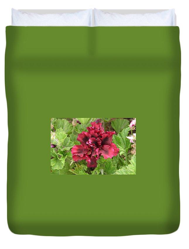 Flower Duvet Cover featuring the photograph Maroon Geranium by Lew Davis