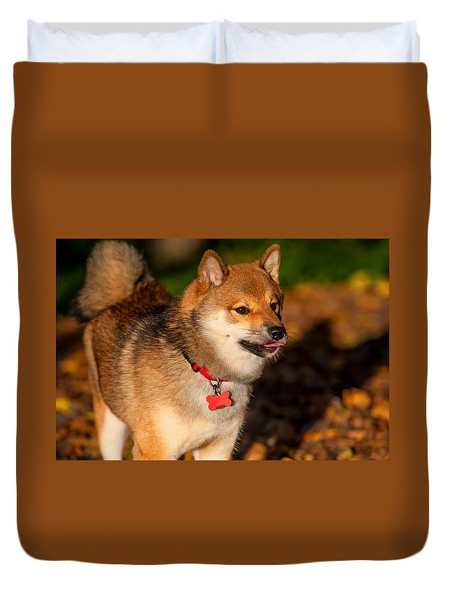 Dog Duvet Cover featuring the photograph Marvel 2. Shiba Inu Breed by Jenny Rainbow