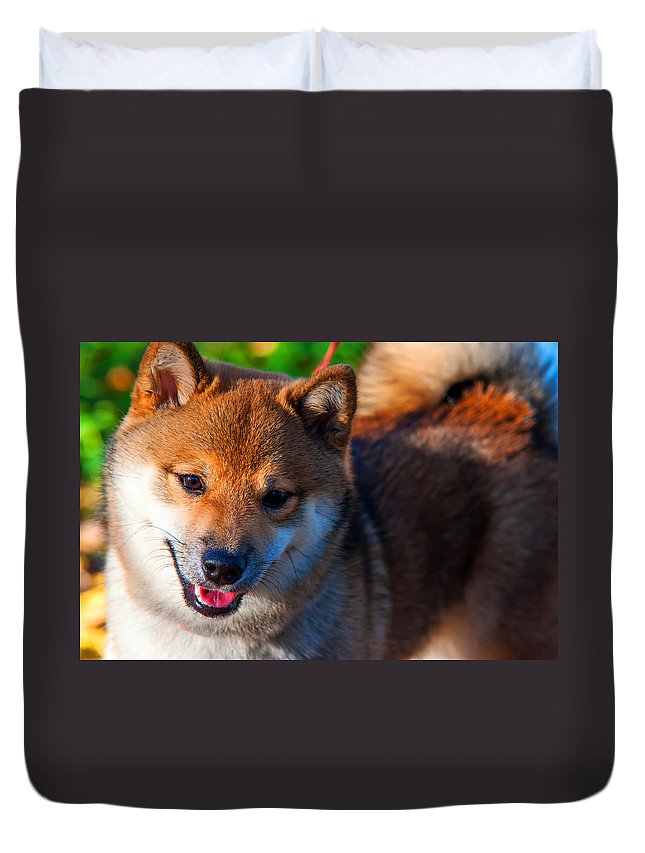 Dog Duvet Cover featuring the photograph Marvel. Shiba Inu Breed by Jenny Rainbow