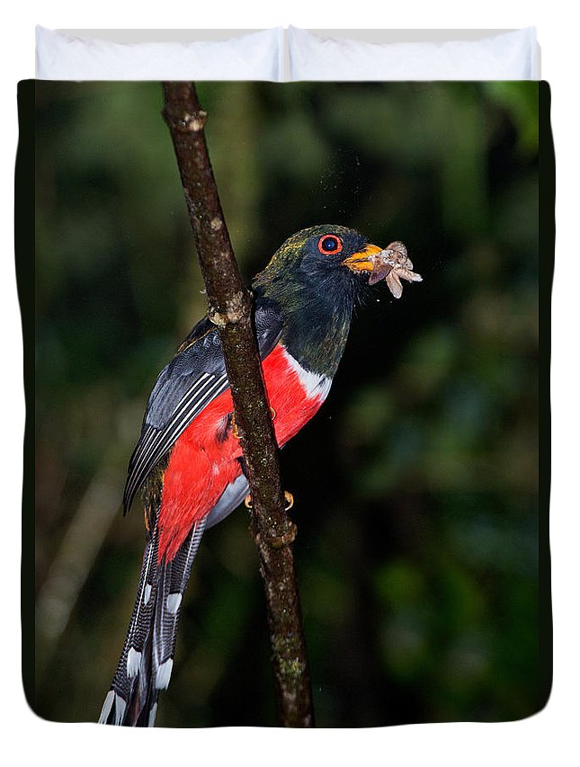 Masked Trogon Duvet Cover featuring the photograph Masked Trogon With Moth by Anthony Mercieca