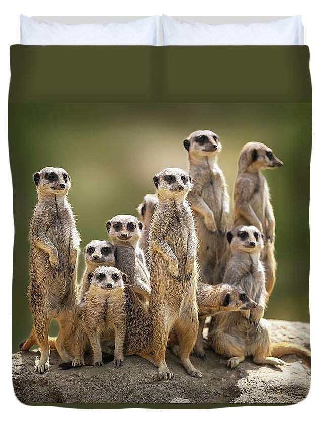 Scenics Duvet Cover featuring the photograph Meerkat Family On Lookout by Kristianbell