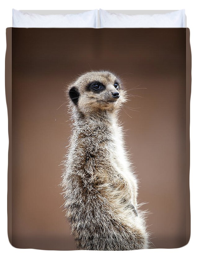 Meerkat Duvet Cover featuring the photograph Meerkat Portrait by Gillian Dernie