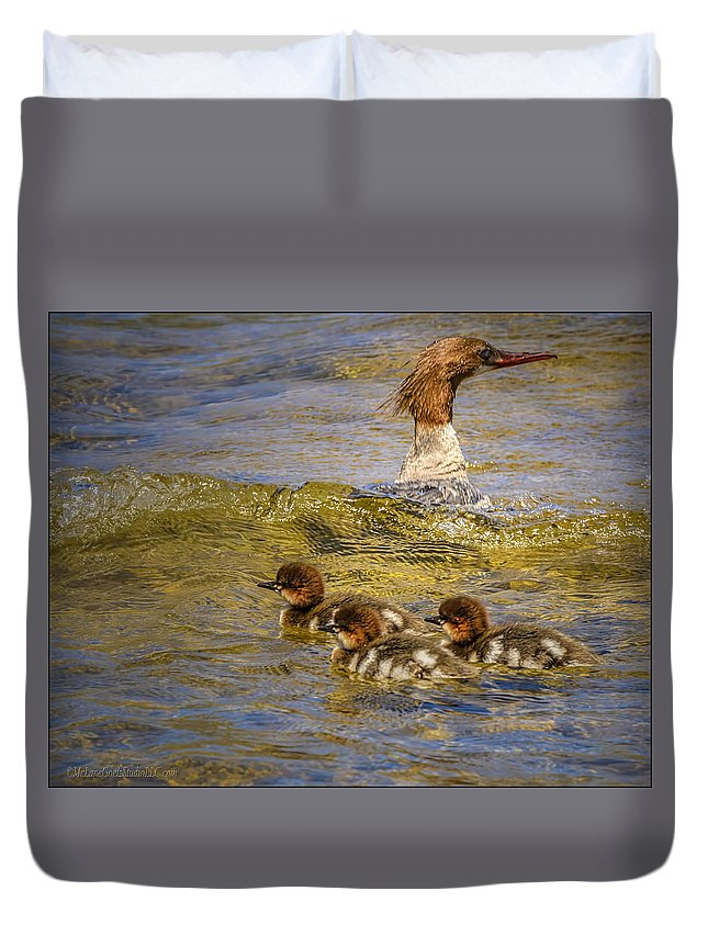 Animals Duvet Cover featuring the photograph Merganser Lake Tahoe by LeeAnn McLaneGoetz McLaneGoetzStudioLLCcom