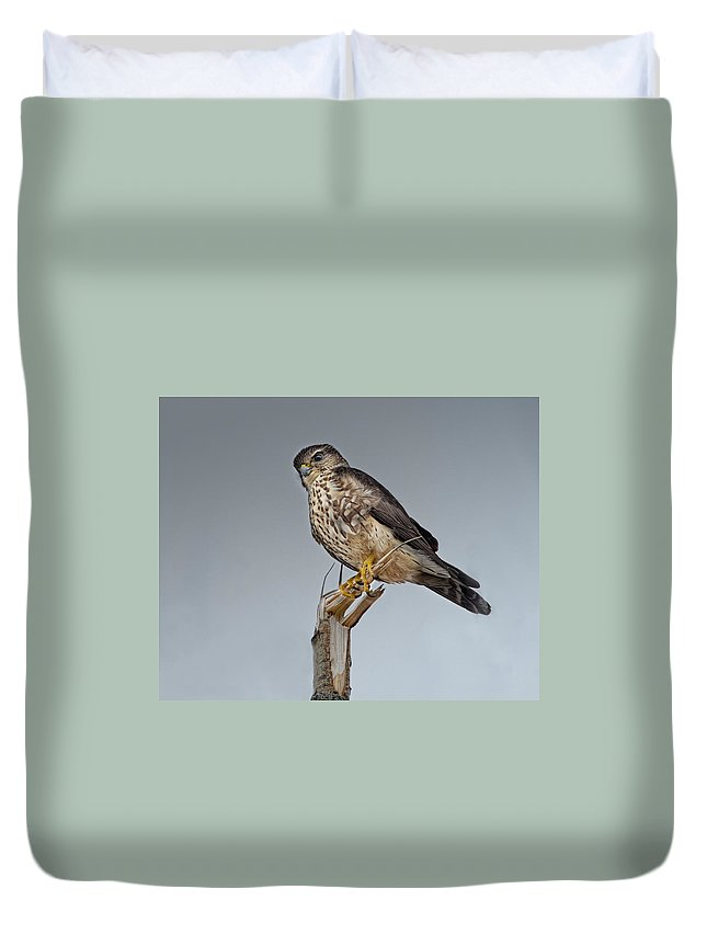 Merlin Falcon Duvet Cover featuring the photograph Merlin Falcon by Susan Capuano