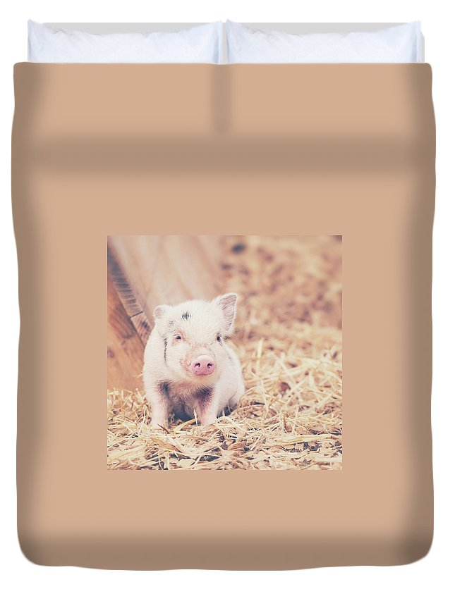 Pig Duvet Cover featuring the photograph Micro Pig by Samantha Nicol Art Photography