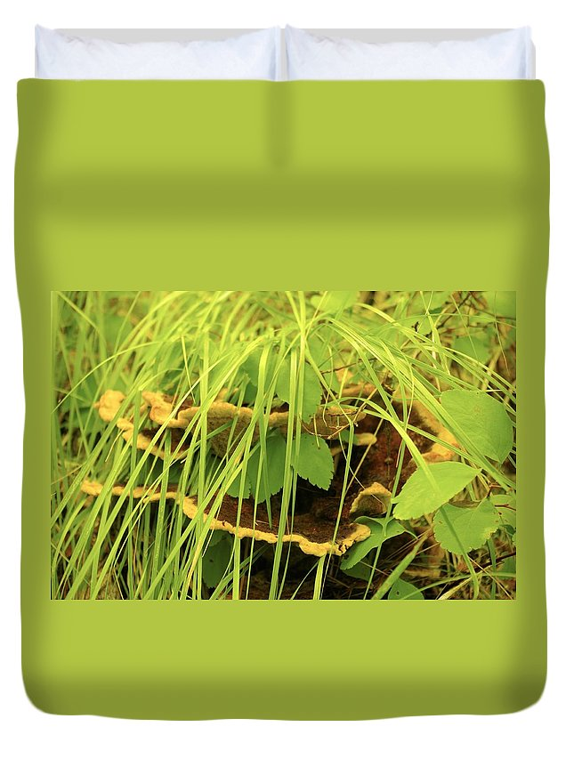 Mushroom Duvet Cover featuring the photograph Midway Mountain Morsels 5 by John Greaves