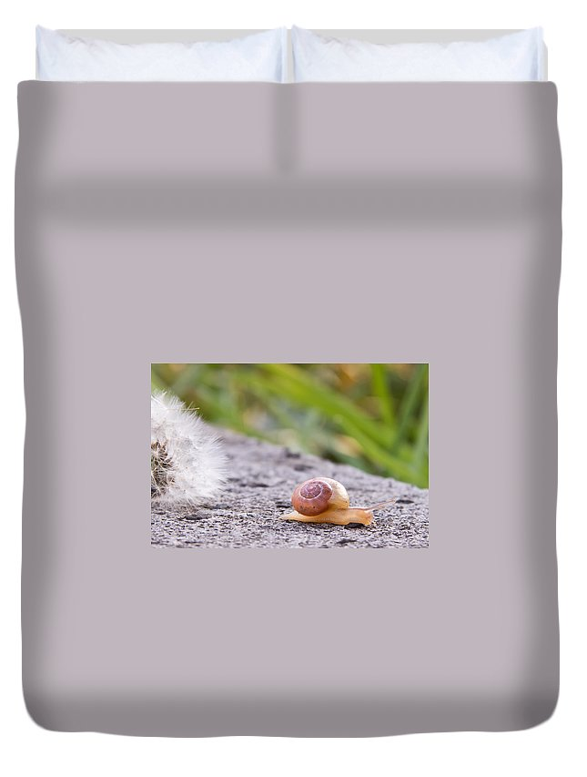 Insect Duvet Cover featuring the photograph Miniature by Christine Sponchia