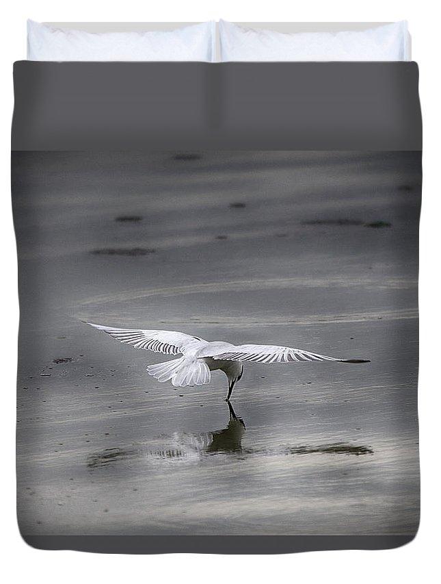 Bird Duvet Cover featuring the photograph Mirror-mirror............ by Douglas Barnard