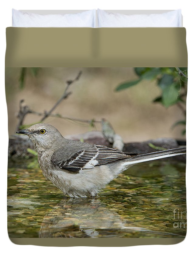 Northern Mockingbird Duvet Cover featuring the photograph Mockingbird by Anthony Mercieca