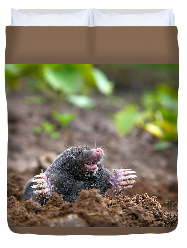 Mole In Ground Duvet Cover