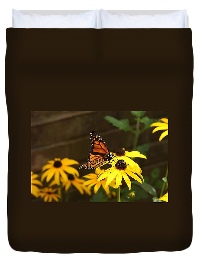 Butterfly Duvet Cover featuring the photograph Monarch At Rest by Nicole Colella