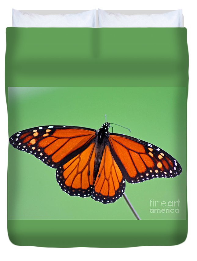 Monarch Duvet Cover featuring the photograph Monarch Butterfly by Karen Adams