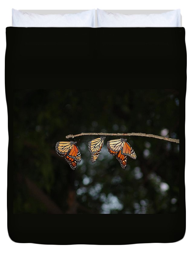 Monarch Butterflies Duvet Cover featuring the photograph Monarch Trio by Shelly Gunderson