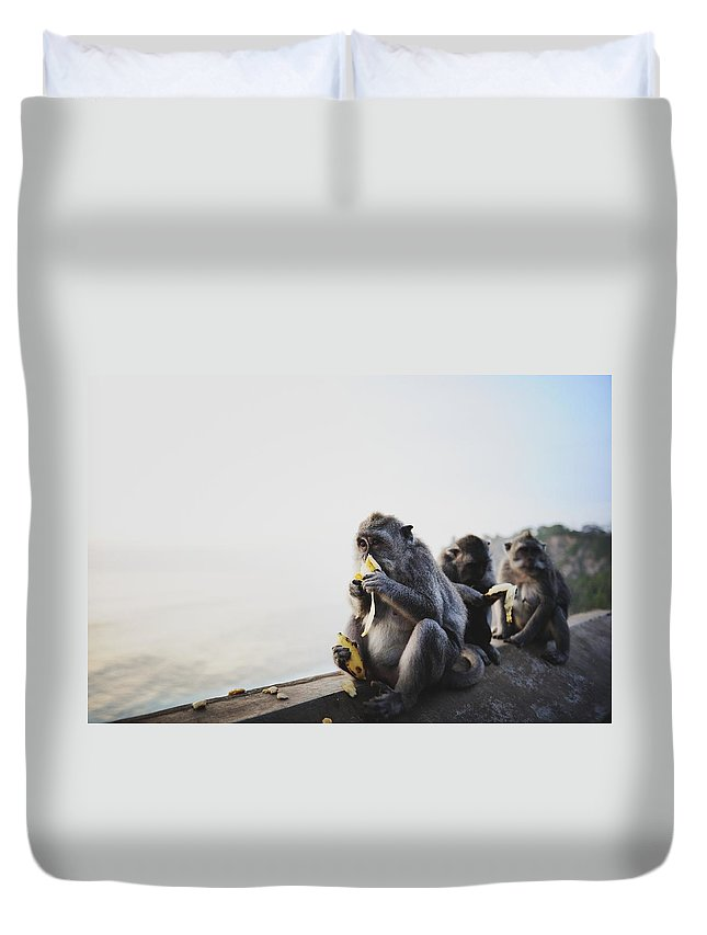 In A Row Duvet Cover featuring the photograph Monkeys Eating Bananas by Carlina Teteris