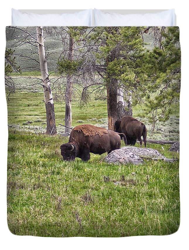 Animals Duvet Cover featuring the photograph Montana Buffalo Grazing by Thomas Woolworth