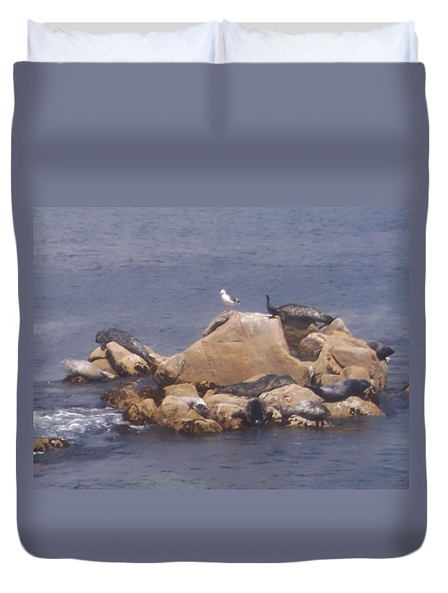Seal Duvet Cover featuring the photograph Monterey Sun Bath by Pharris Art