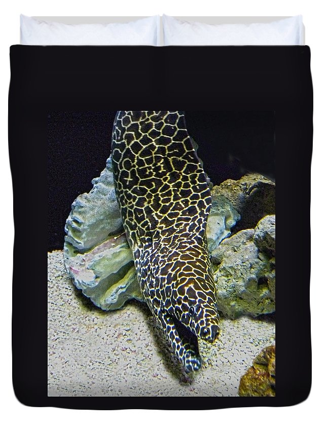 Eel Duvet Cover featuring the photograph Moray Eel by Sandi OReilly