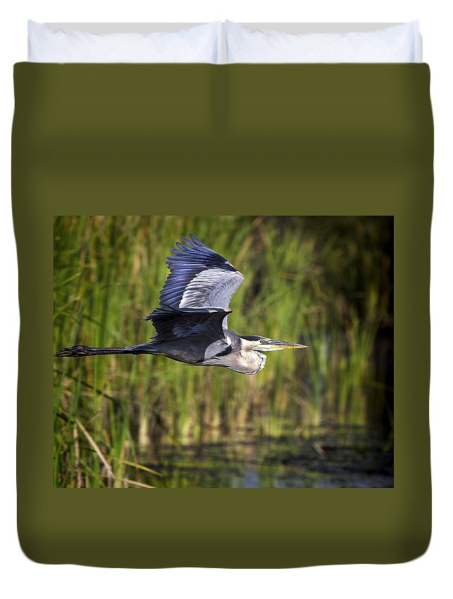 Great Blue Heron Duvet Cover featuring the photograph Morning Glory by Mark Andrew Thomas