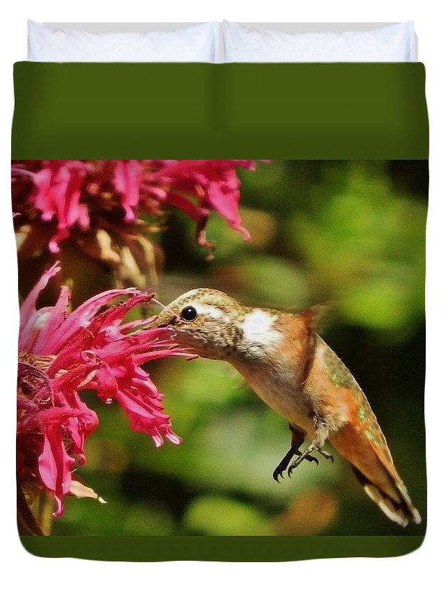 Bird Duvet Cover featuring the photograph Morning Rufous by VLee Watson