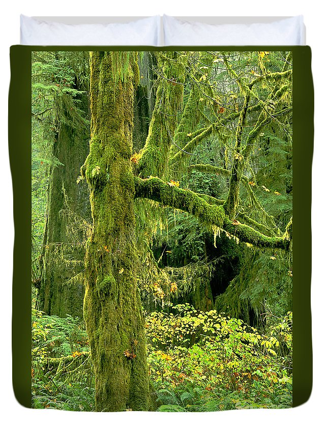 Big Leaf Maple Duvet Cover featuring the photograph Moss Draped Big Leaf Maple California by Dave Welling