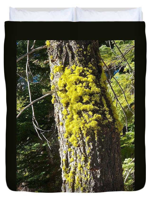 Moss On Tree Along Sentinel Dome Trail In Yosemite Np Duvet Cover featuring the photograph Moss On Tree Along Sentinel Dome Trail In Yosemite Np-ca by Ruth Hager