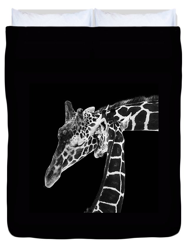 3scape Photos Duvet Cover featuring the photograph Mother and Baby Giraffe by Adam Romanowicz