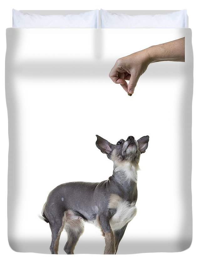 Dog Duvet Cover featuring the photograph Motivation by Edward Fielding