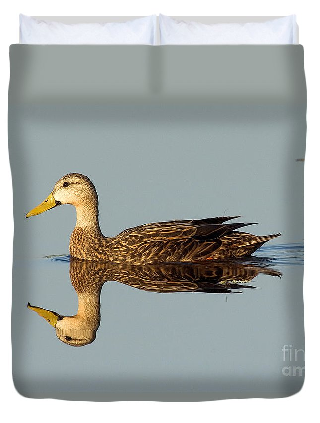 Animal Duvet Cover featuring the photograph Mottled Duck by Anthony Mercieca