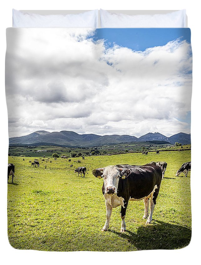 Cow Duvet Cover featuring the photograph Mourne Cows by George Pennock