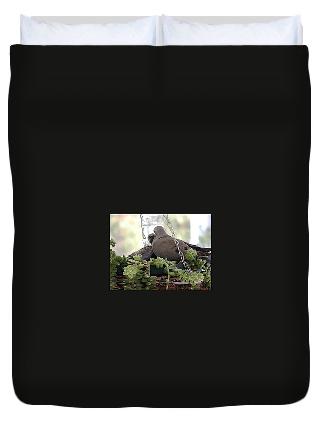 Bird Duvet Cover featuring the photograph Mourning Dove Feeding Baby Dove by Jussta Jussta