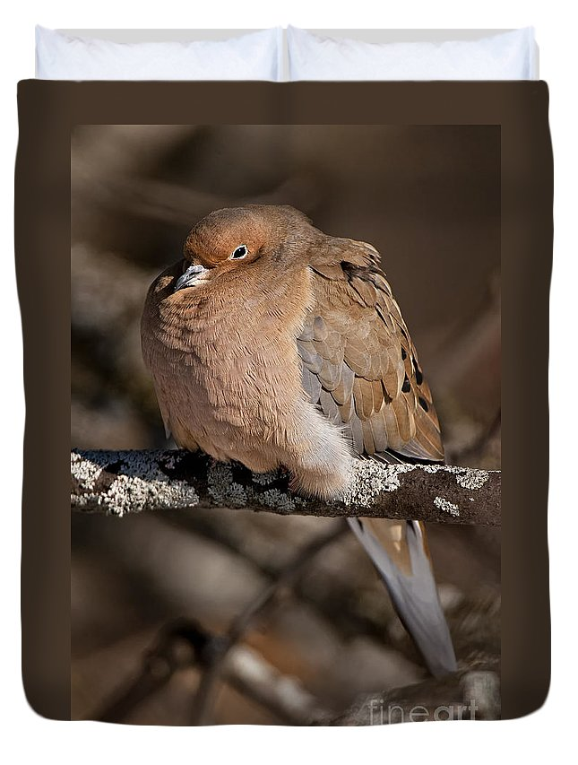 Mourning Dove Duvet Cover featuring the photograph Mourning Dove Pictures 32 by World Wildlife Photography