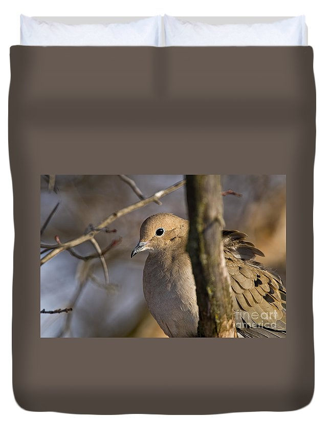 Mourning Dove Duvet Cover featuring the photograph Mourning Dove Pictures 39 by World Wildlife Photography