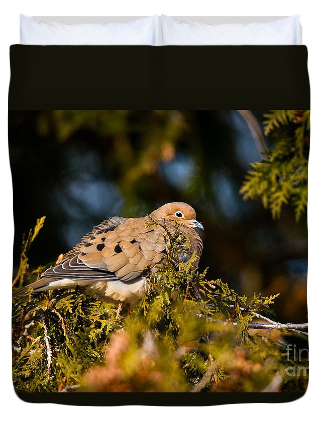 Mourning Dove Duvet Cover featuring the photograph Mourning Dove Pictures 64 by World Wildlife Photography