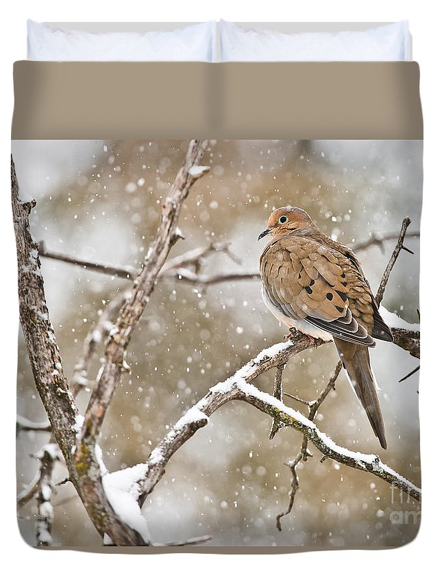 Mourning Dove Duvet Cover featuring the photograph Mourning Dove Pictures 68 by World Wildlife Photography